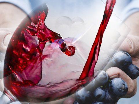 Cene Degustazione Vini Bolgheri Cipriana