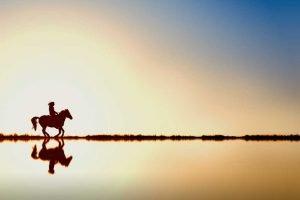 Horse Riding Emotion