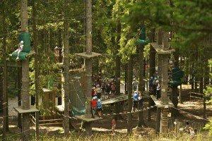 parco, avventura, sospeso, bosco, natura, divertimento, sport